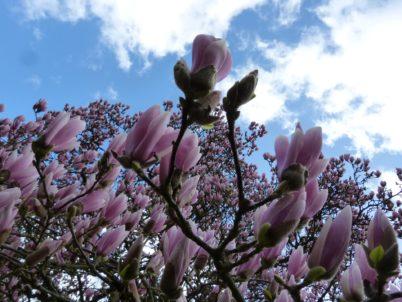 Retour en images sur la balade : « Beau comme un arbre dans la ville »