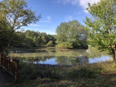 Dimanche 14 juin 2020 : randonnée aux étangs de Narbonne à Joué-lès-Tours